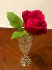 Rose_resize.jpg