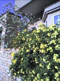 Spring%20flowers_resize.jpg