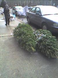 Christmas%20trees_resize.jpg