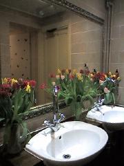 Flower%20Toilet_resize.jpg