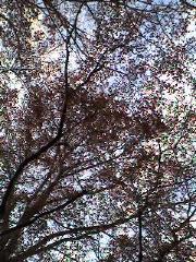 Trees_resize.jpg